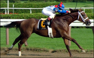 Azeri, 2002 Horse of the Year