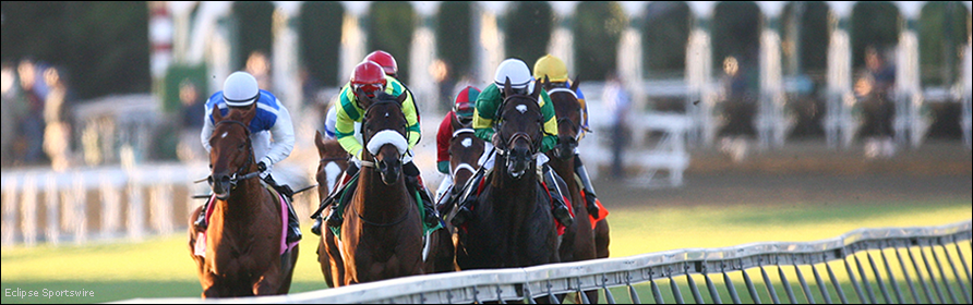 Turf horses with the starting gate behind them.